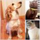 Ошейники для кошек и собак с номером телефона